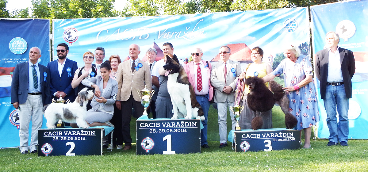 Best in Show (BIS) - BIS CACIB Varaždin (Croatia), Saturday, 28 May 2016 (photo)