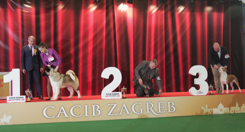 Best Puppy - BIS IDS Zagreb (Croatia), Sunday, 27 November 2016 (Photo)