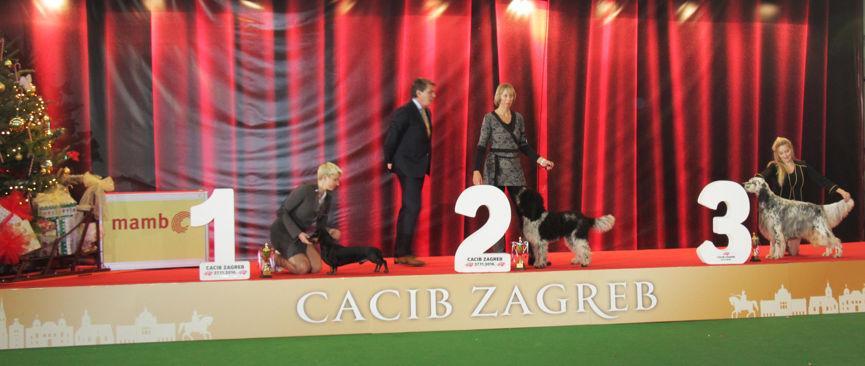 Best Hunting Dog - BIS IDS Zagreb (Croatia), Sunday, 27 November 2016 (Photo)