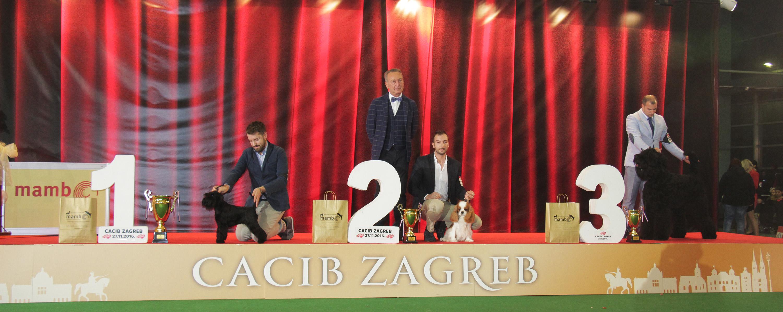 Best Junior - BIS IDS Zagreb (Croatia), Sunday, 27 November 2016 (Photo)