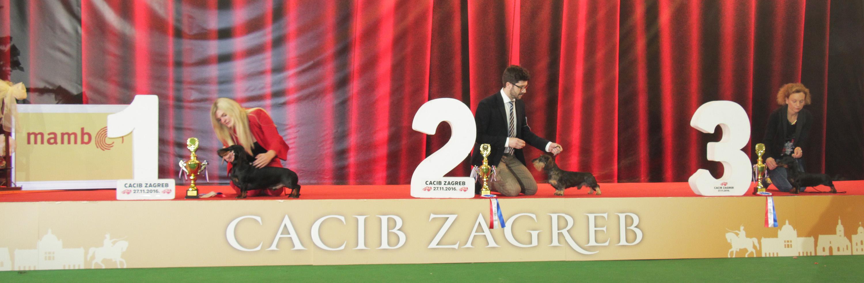 FCI group IV - BIS IDS Zagreb (Croatia), Sunday, 27 November 2016 (Photo)
