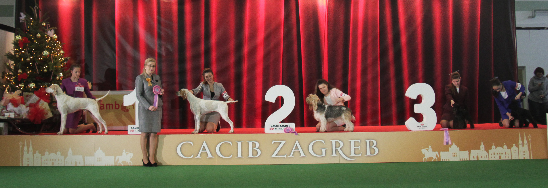 Best Junior Handler - BIS IDS Zagreb (Croatia), Sunday, 27 November 2016 (Photo)