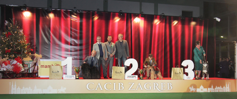 Best in Show (BIS) - BIS IDS Zagreb (Croatia), Sunday, 27 November 2016 (Photo)