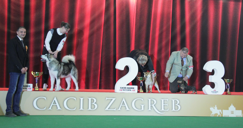 Best Puppy - BIS IDS Zagreb (Croatia), Saturday, 26 November 2016