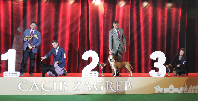 Best Veteran - BIS IDS Zagreb (Croatia), Saturday, 26 November 2016