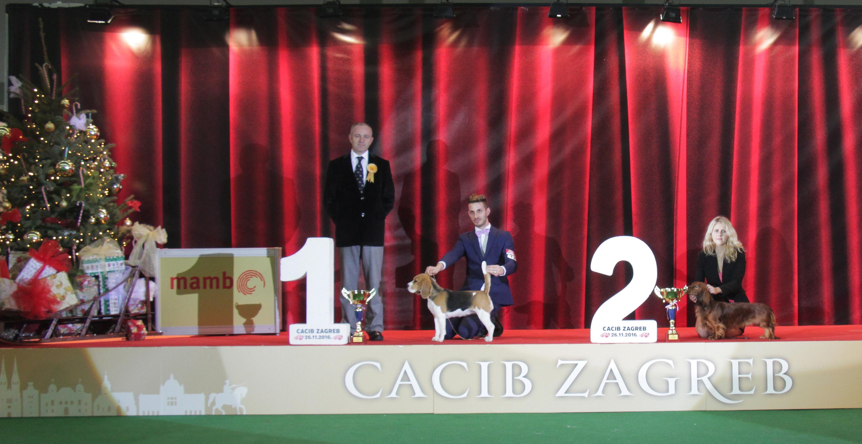 Best Hunting Dog - BIS IDS Zagreb (Croatia), Saturday, 26 November 2016