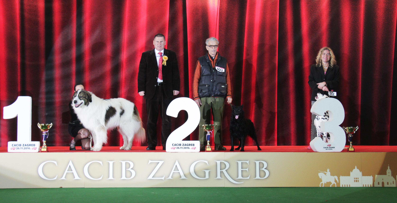 Best Croatian Breed - BIS IDS Zagreb (Croatia), Saturday, 26 November 2016